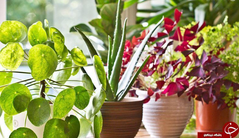 روش هایی برای پرورش گیاهان زینتی و سبزیجات در یک لیوان آب