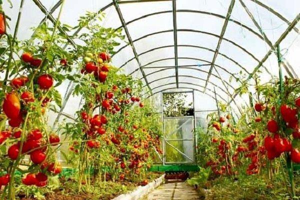راه اندازی مجتمع های گلخانه ای در چهارمحال و بختیاری لازم است
