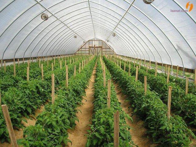 شرایط برای توسعه کشت گلخانه ای در ابهر فراهم است