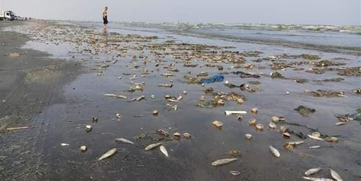 وزیر یمنی: ائتلاف سعودی آب های سواحل عدن را آلوده مواد شیمیایی کرده است