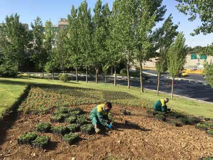 کاشت 8 هزار مترمربع گل فصلی در منطقه 13