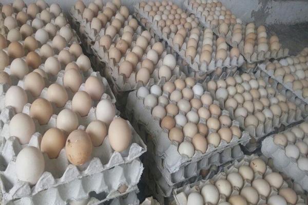 خبرنگاران 8 تن تخم مرغ احتکاری در زاهدان کشف شد