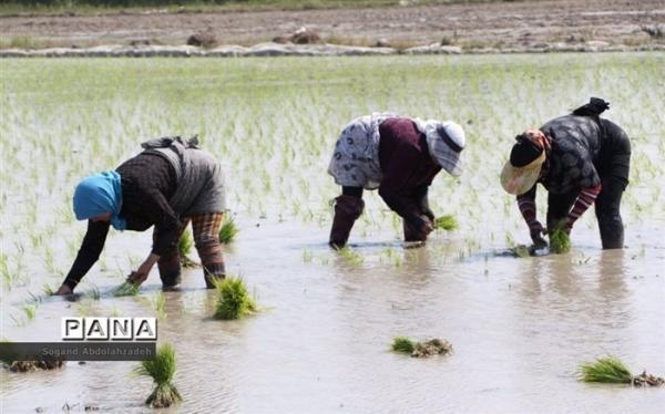 نشاکاری در 80 درصد از اراضی استان های شمالی