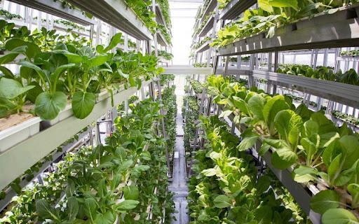 269 شرکت دانش بنیان احتیاج کشور به محصولات زیستی و کشاورزی را برطرف می نماید